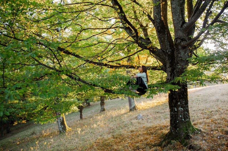 Giovane donna graziosa in un albero che spende tempo in natura fotografie stock