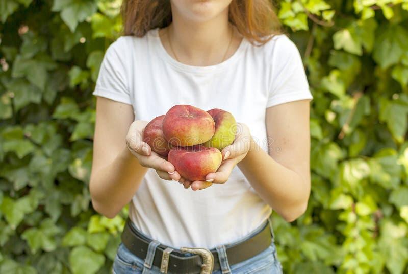 Giovane donna isolata che tiene alcune pesche piane rosse in sue mani Platycarpa di prunus persica Pesca cinese e piana Varietà: fotografia stock libera da diritti