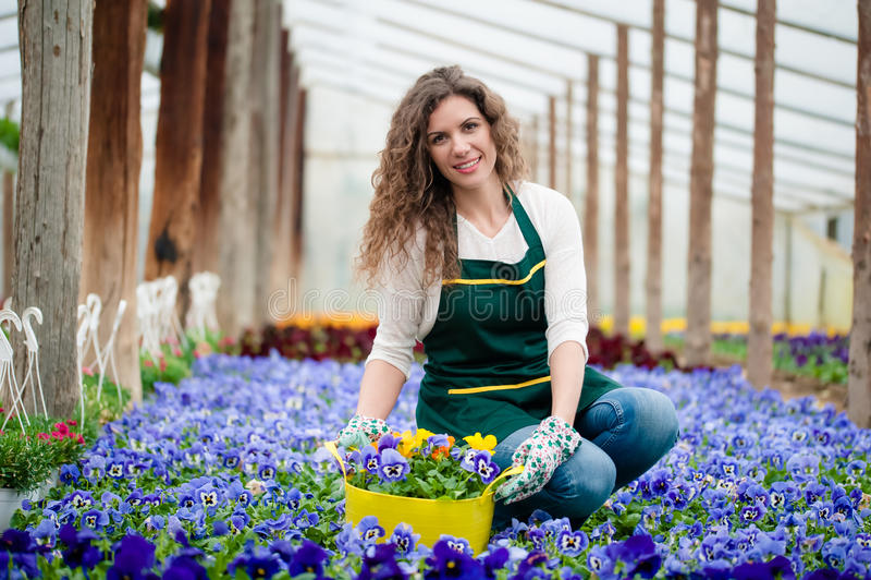 Giovane donna in un giardino floreale variopinto in una serra che seleziona un vaso di fiore immagini stock libere da diritti