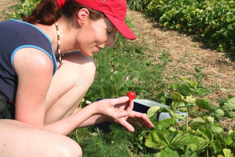 Giovane donna in una fragola field3 immagine stock