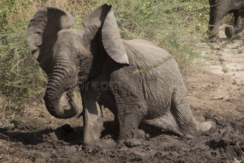 Giovane elefante che gioca con il fango immagine stock