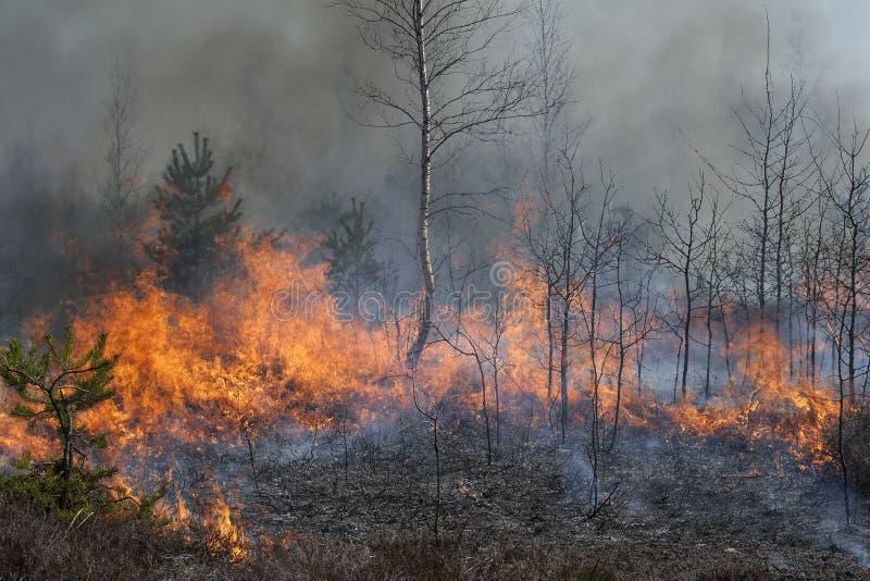 Giovane foresta in fuoco fotografia stock libera da diritti