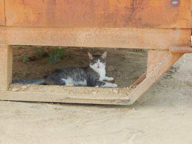 Download Giovane gatto fotografia stock. Immagine di felino, colore - 55365796