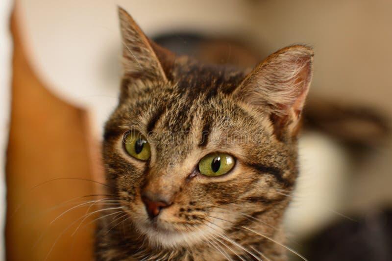 Giovane gatto fotografia stock