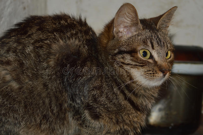 Giovane gatto fotografie stock