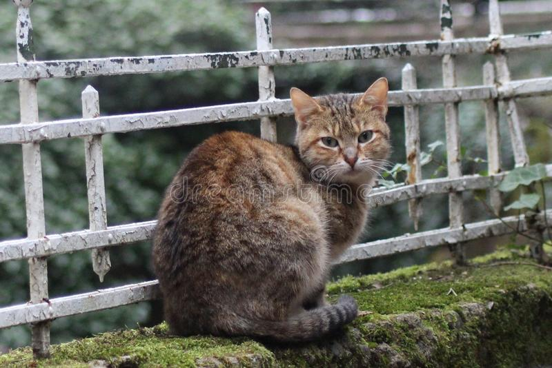 Giovane gatto calmo che fissa alla macchina fotografica immagini stock
