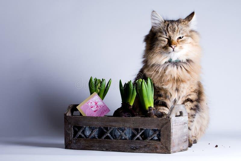 Giovane gatto e un fiore fotografia stock