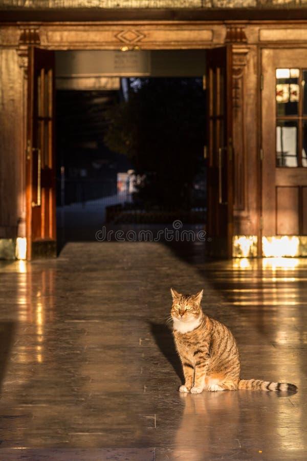 Giovane gatto maschio che sta nella entrata della stazione ferroviaria di Haydarpasa a Costantinopoli, Turchia, durante il tramon immagini stock