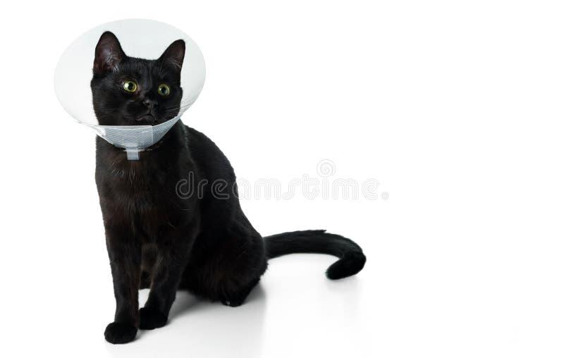 Giovane gatto nero in un collare veterinario protettivo fotografie stock