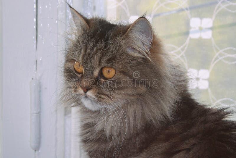 Giovane gatto sveglio che si siede sulla finestra fotografie stock libere da diritti