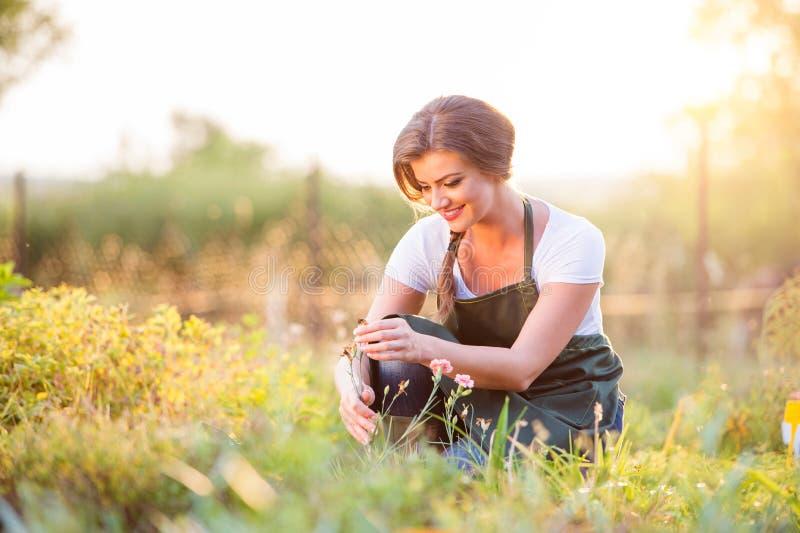 Giovane giardiniere in giardino con le varie piante, natura soleggiata fotografia stock libera da diritti