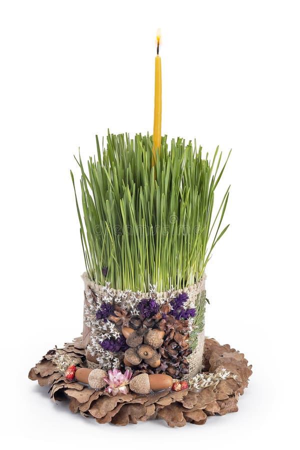 Giovane grano, bozic con la candela accesa dentro una corona delle foglie della quercia isolate su bianco fotografia stock libera da diritti