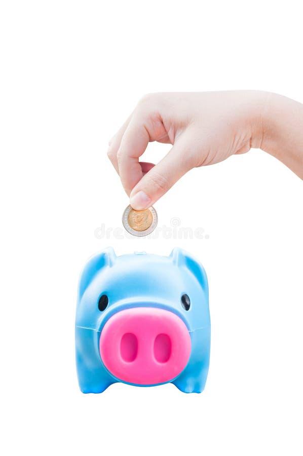 Giovane mano delle donne che mette la moneta dei soldi nel maiale di risparmio, tema di finanza fotografie stock