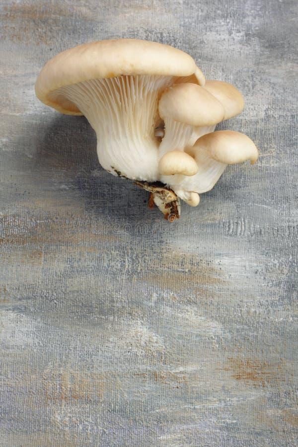 Giovane mazzo dei funghi di ostrica immagine stock libera da diritti