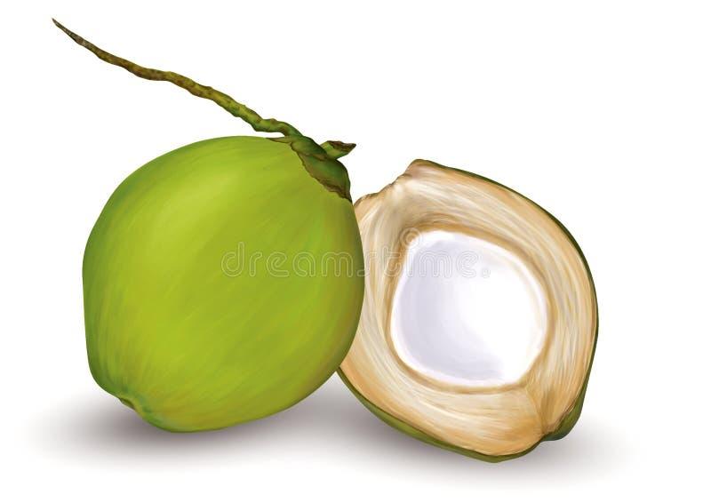 Giovane noce di cocco verde illustrazione di stock