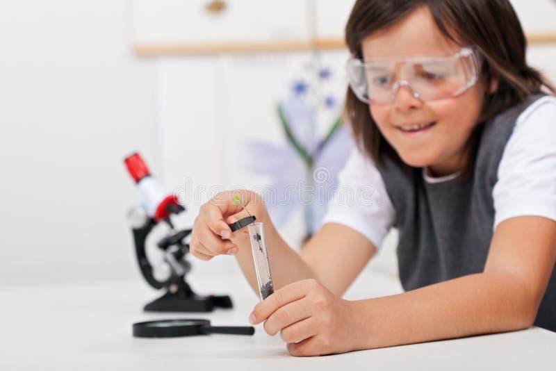Giovane pianta di studio del ragazzo nella classe di Biologia fotografia stock libera da diritti