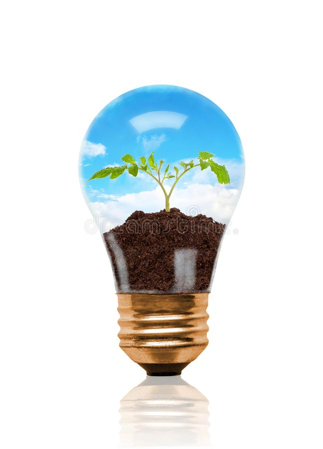 Giovane piantina che cresce dal suolo dentro la lampadina illustrazione di stock