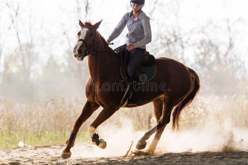 Giovane ragazza graziosa - montando un cavallo con le foglie retroilluminate dietro immagini stock libere da diritti