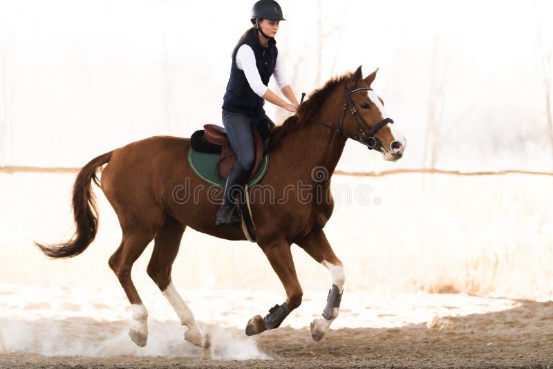 Giovane ragazza graziosa - montare un cavallo nella mattina di inverno fotografia stock libera da diritti
