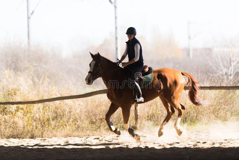 Giovane ragazza graziosa - montare un cavallo nella mattina di inverno immagine stock