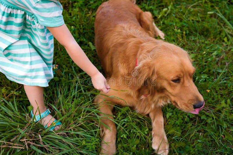 Giovane ragazza prescolare che gioca con il suo cane di animale domestico sveglio immagini stock libere da diritti