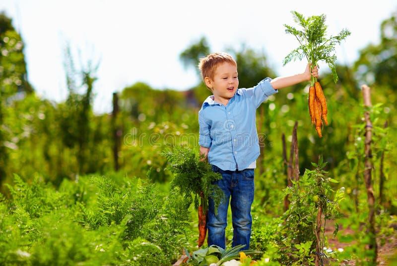 Giovane ragazzo con la carota che gode della vita in campagna fotografie stock libere da diritti