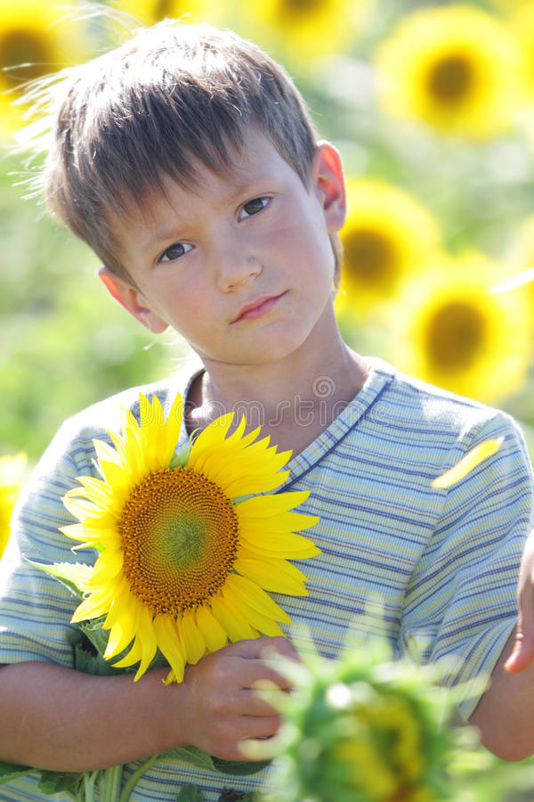 Giovane ragazzo sveglio del bambino con il girasole fotografia stock libera da diritti