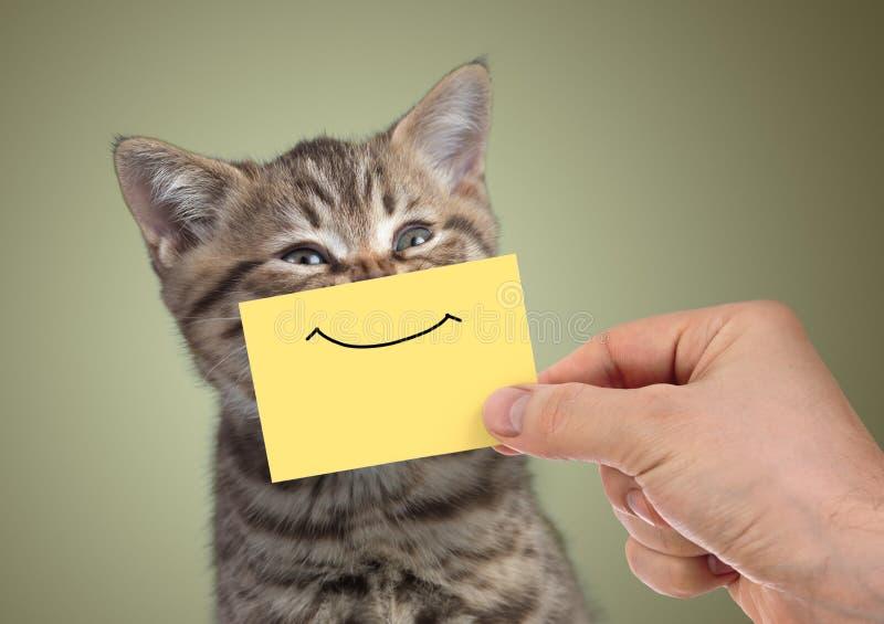 Giovane ritratto felice divertente del gatto con il sorriso su cartone fotografia stock