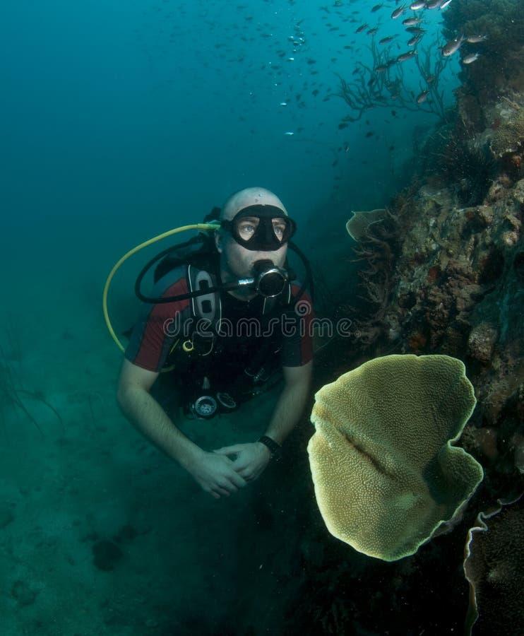 Giovane ritratto maschio dell'operatore subacqueo di scuba immagine stock