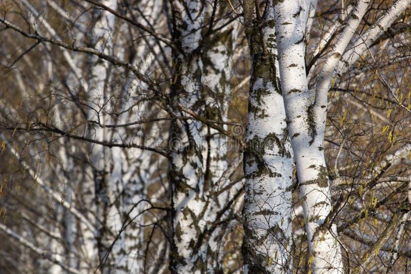 Giovane scalatore maschio che appende da una scogliera immagini stock libere da diritti