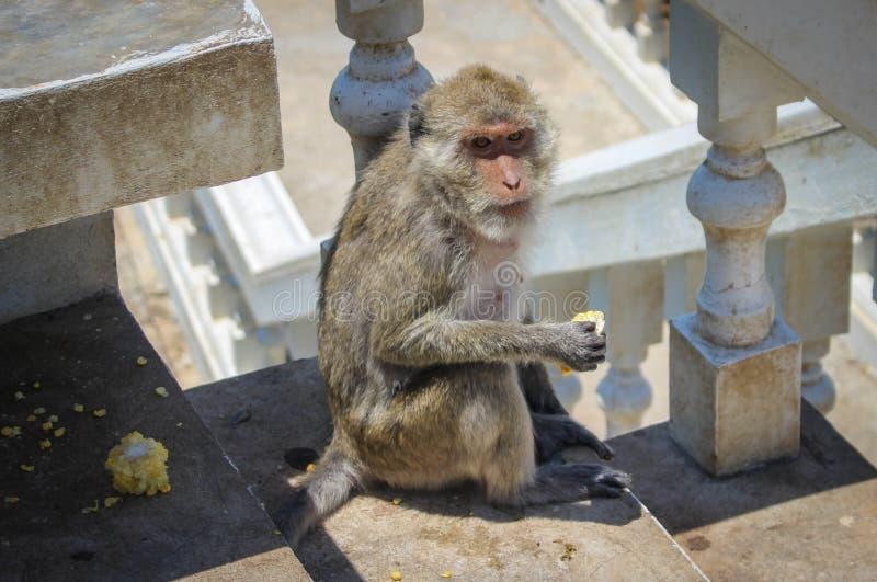 Giovane scimmia immagini stock