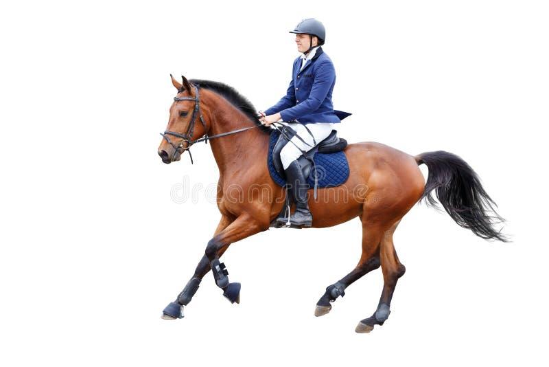 Giovane uomo del cavaliere sul cavallo di baia isolato su bianco fotografia stock libera da diritti
