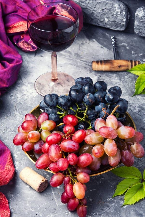 Giovane vino rosso fotografia stock libera da diritti