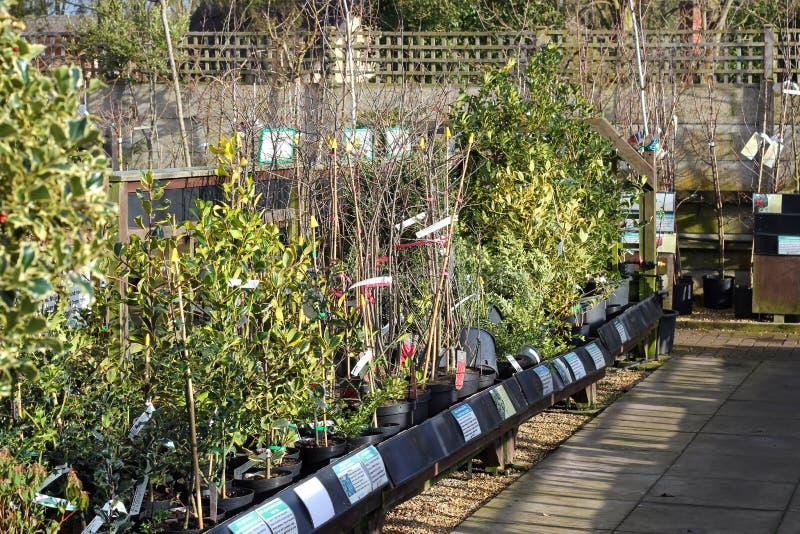Giovani alberi ad un centro di giardino. fotografie stock