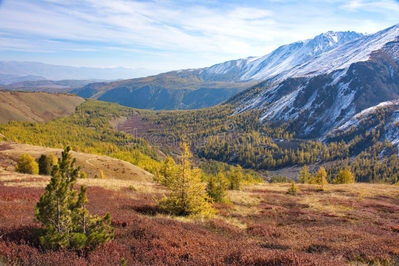 Giovani alberi contro lo sfondo di un paesaggio della montagna di autunno immagini stock