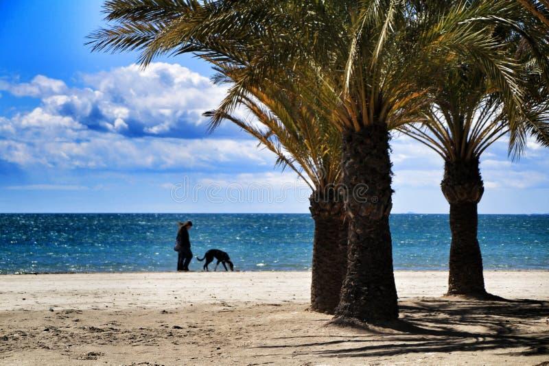Giovani che camminano dalla riva in un giorno soleggiato fotografia stock libera da diritti