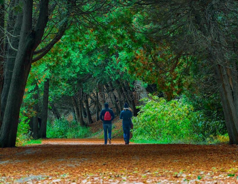 Giovani coppie che camminano attraverso gli alberi di cedro sull'isola di Mackinac fotografia stock