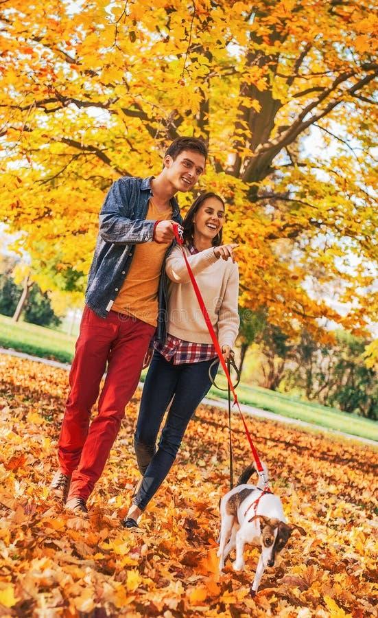 Giovani coppie felici con due cani svegli che camminano nel parco fotografia stock libera da diritti