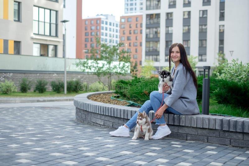 Giovani donne attraenti che si siedono con il cucciolo del cane di due husky sulla via immagini stock libere da diritti