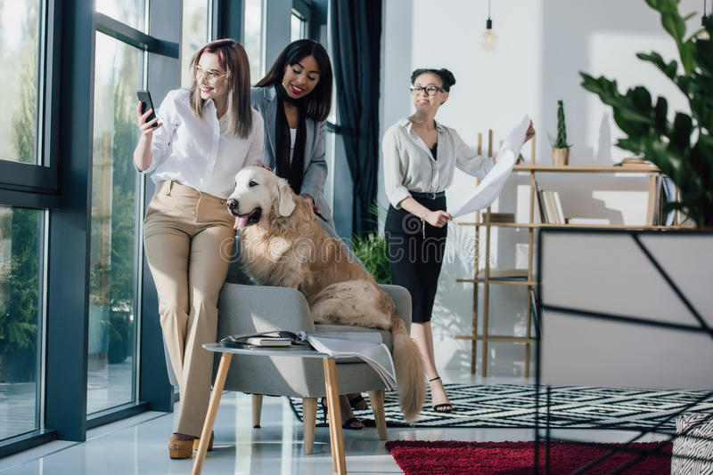 Giovani donne di affari sorridenti nell'usura convenzionale che lavora e che si diverte con il cane di golden retriever in uffici immagini stock libere da diritti