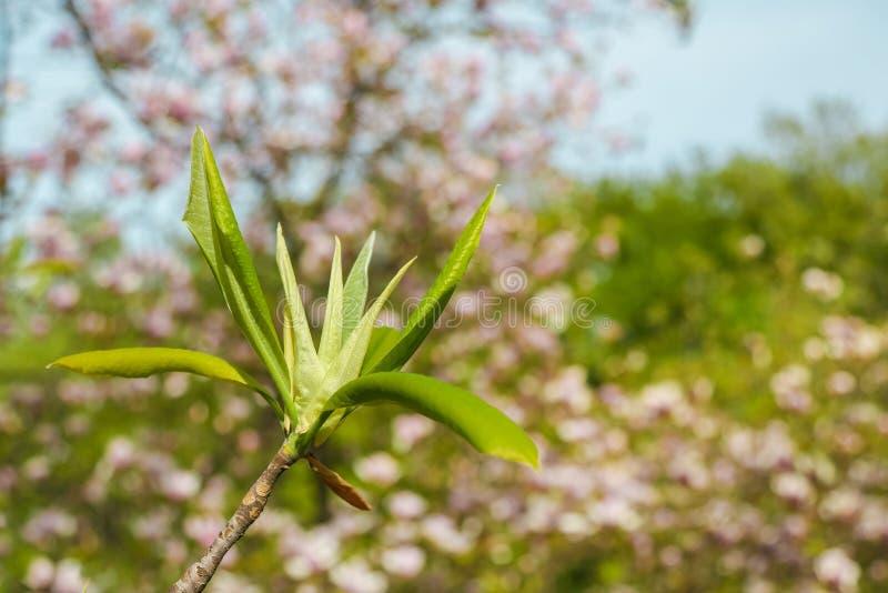 Giovani foglie dell'albero immagini stock