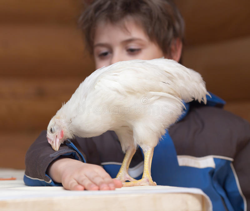 Giovani gallina e ragazzo fotografia stock libera da diritti