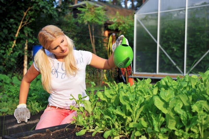 Giovani piante d'innaffiatura di giardinaggio dell'insalata della donna fotografie stock libere da diritti