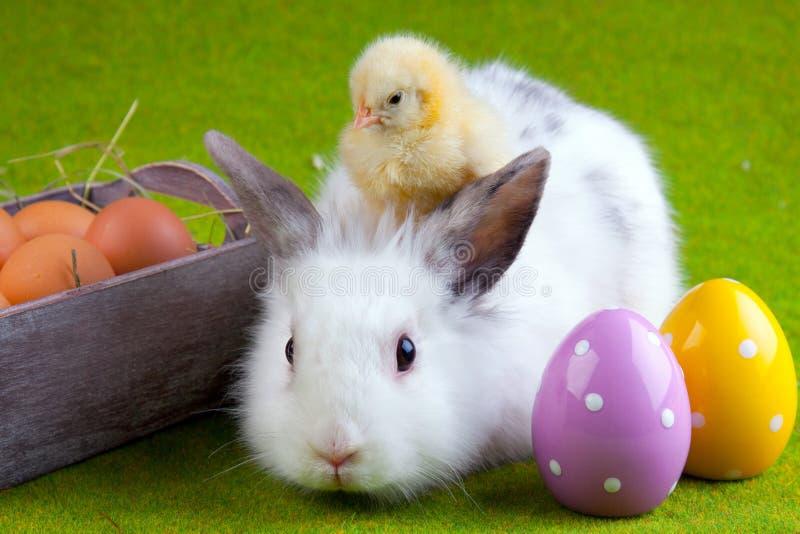Giovani pulcino e coniglio