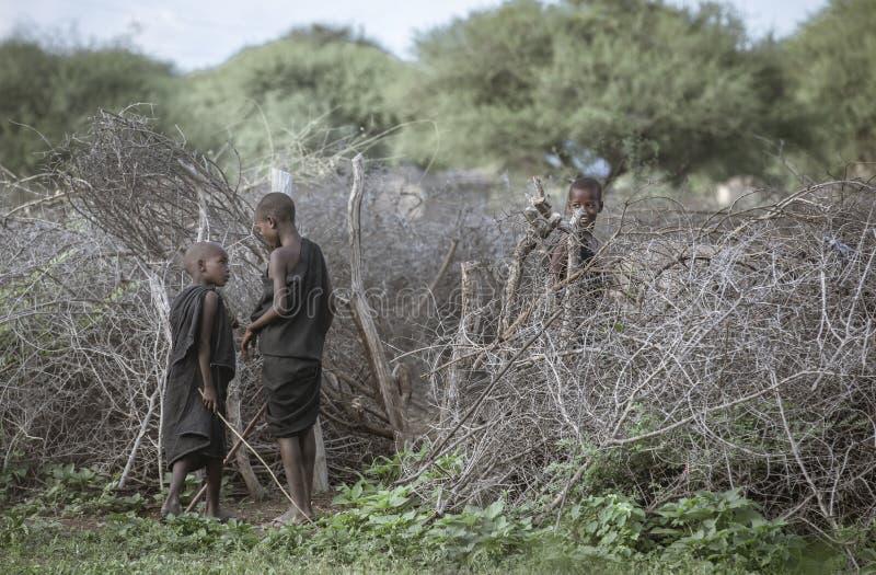 Giovani ragazzi di maasai che radunano le mucche fotografia stock libera da diritti