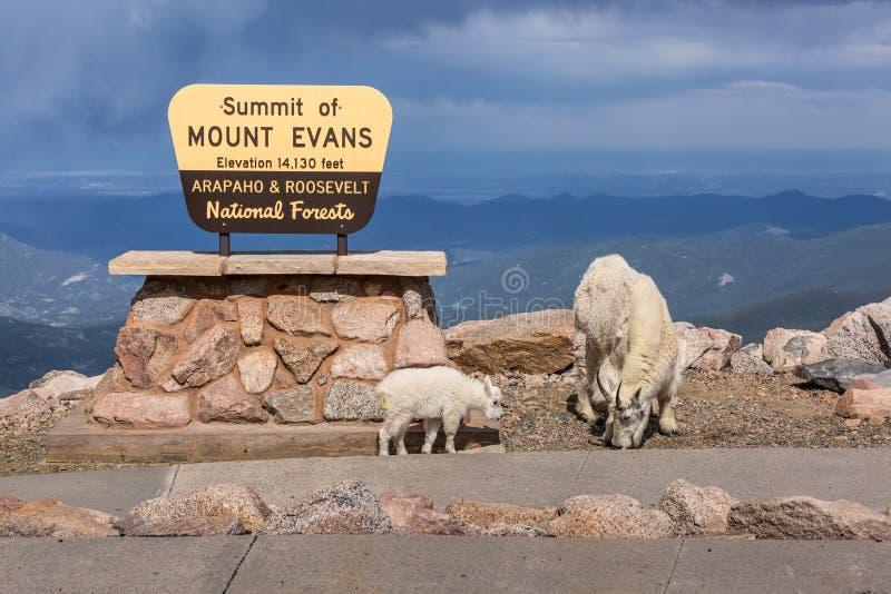 Gipfel des Bergs Evans-Zeichen mit Ziegen stockbilder