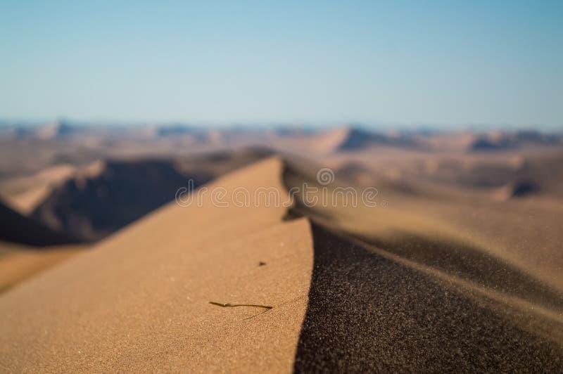 Gipfel von Big Daddy Dune Close oben mit dem Sand, der im Wind durchbrennt lizenzfreies stockbild