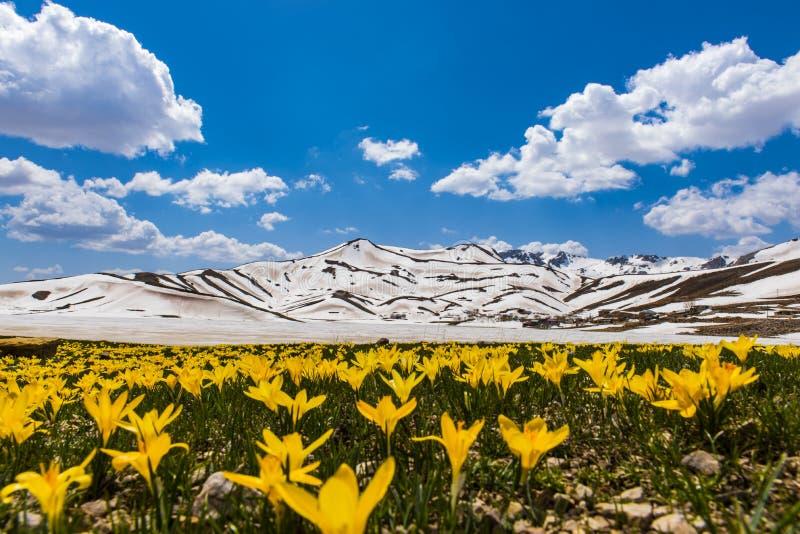 Gipfelfrühlingsschönheiten in den Bergen stockfoto