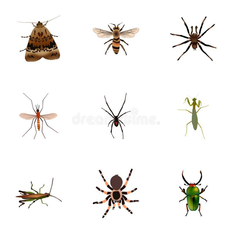 Girador realístico, locustídeo, aracnídeo e outros elementos do vetor O grupo de símbolos realísticos do erro igualmente inclui a ilustração do vetor