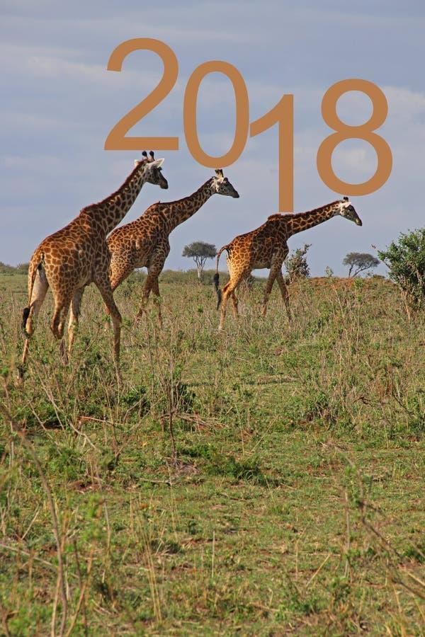 Giraf drie stock fotografie